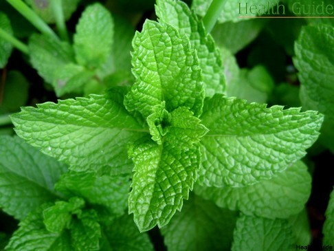 What you should know about mint?