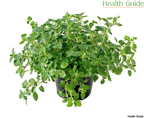 The benefits of oregano