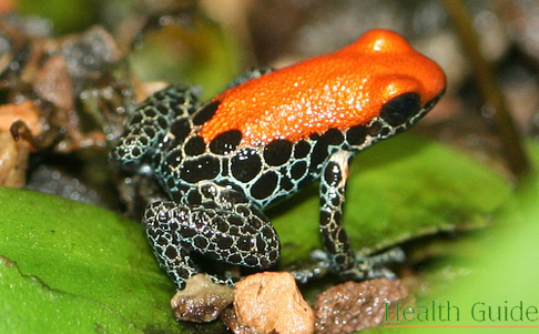 Chemical substances in frog skin can help to cure cancer