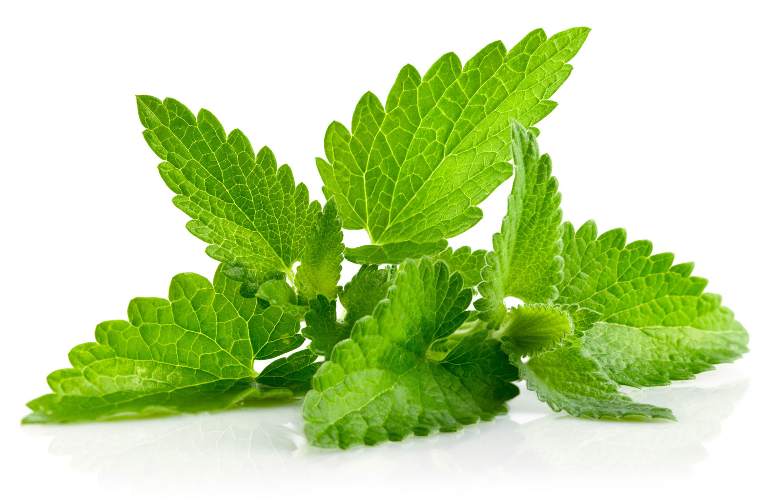 The benefits of mint leaves