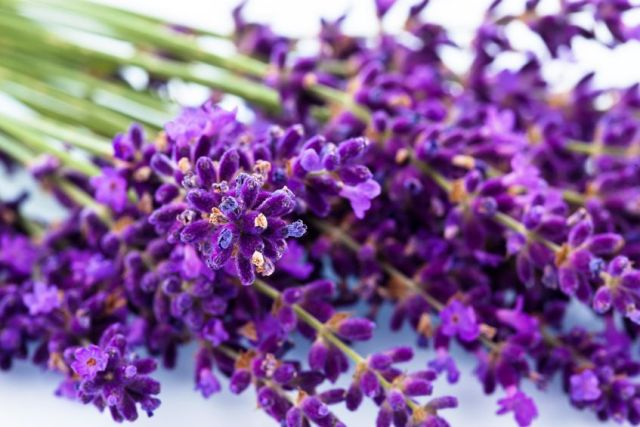 Did you know that lavender is a great antidepressant?