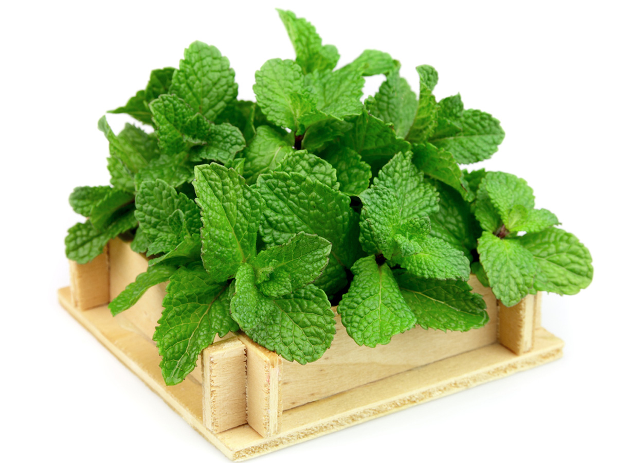 What you need to know about mint