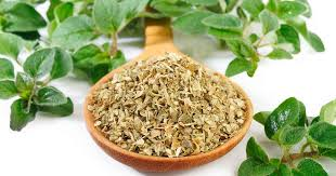 What you need to know about oregano