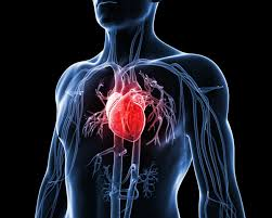 How to avoid heart diseases?